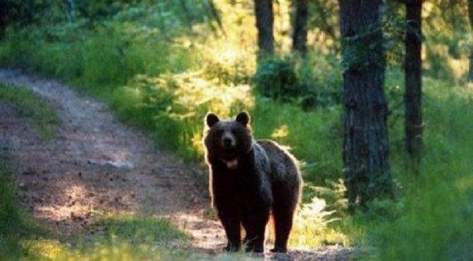 Salviamo l'orsa JJ4 e fermiamo il leghista Fugatti che vuole abbatterla